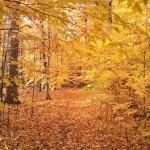Trillium Woods in Autumn